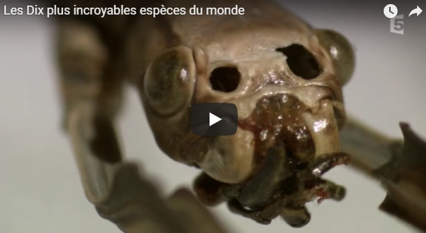 Les Dix plus incroyables espèces du monde - Journal Pour ou Contre - MowXml