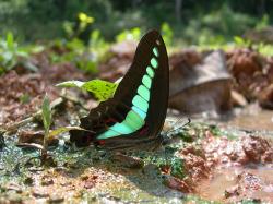 Thaïlande : le Triangle d'Emeraude : parc de Khao Yai