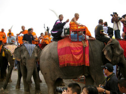 Thaïlande : la route des citadelles khmères : les éléphants